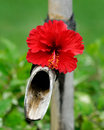 Bamboo water tap decorated with flower Royalty Free Stock Photo