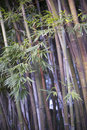 Bamboo, Zen tropical ambiance Stock Images