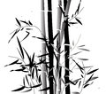 Bamboosa black and grey bamboo bush isolated on a white background Stock Image