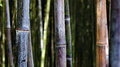 Bambu workart forest in south spain Royalty Free Stock Photography