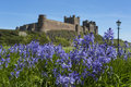 Bamburgh bluebells castle selective focus Stock Images