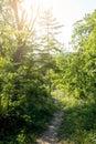 Bana i skogen med solljus Royaltyfria Bilder