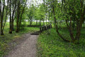 Bana med en trätrappuppgång i skogen Royaltyfri Foto