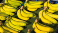 Banana be sold by bunches in market Royalty Free Stock Photo