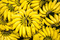 Banana bunches Royalty Free Stock Photo