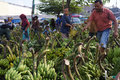 Banana the buyer selects the bananas sold in the market in the town of solo central java indonesia Stock Images