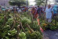 Banana the buyer selects the bananas sold in the market in the town of solo central java indonesia Stock Photos