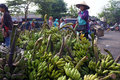 Banana the buyer selects the bananas sold in the market in the town of solo central java indonesia Stock Photography