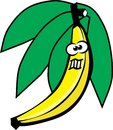 Banana cartoon Royalty Free Stock Photo