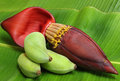 Banana flower eaten as delicious vegetable fresh nature Royalty Free Stock Image