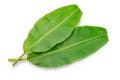Banana leaf isolated on white background Royalty Free Stock Photo