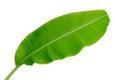 Banana leaf isolated on white background, Royalty Free Stock Photo