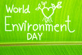 Banana leaf textured, write World Environment Day