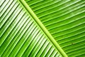 Banana Leave Royalty Free Stock Images
