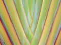 Banana leaves cascaded like a blow background texture Stock Images