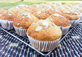 Banana muffin muffins with mixed seeds on a cooling rack Stock Image
