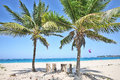 Banana paradise two lonely palm trees on the white sand tropical beach are swaying in the wind ideal conditions for surfing Royalty Free Stock Photos