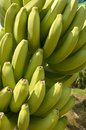 Banana Plantation Cameroon Stock Photo
