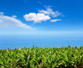 Banana plantation near the ocean in La Palma Royalty Free Stock Images