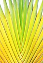 Banana stem Stock Photo