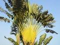 Banana trees against the sky Royalty Free Stock Photo