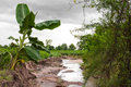 Banana trees erode Royalty Free Stock Photo