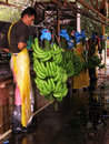 Banana Worker Processing Green Bananas Stock Photography