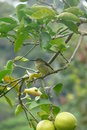 Bananaquit Bird Standing On A ...