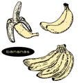 stock image of  Bananas illustration 1
