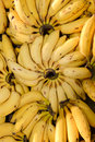 Bananas for Sale at the Market Royalty Free Stock Images