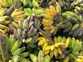 Banane mature & non mature del Borneo Immagini Stock