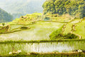 Banaue Royalty Free Stock Photography