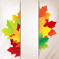 Bandera del papel de autumn composition from leaves and Imagen de archivo