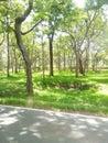 Bandipur national park Royalty Free Stock Photo