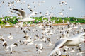Bang poo thailand swarm of seagull flying bird in the blue sky at Royalty Free Stock Photo