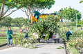 Bangkok oct man and women working to cut and move tree aft after down thailand Stock Photos