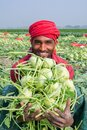 A worker hands are full of turnip at Savar, Dhaka, Bangladesh