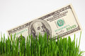 Banknote in a grass Royalty Free Stock Photo