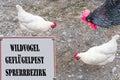 Banned sign with inscription Wild bird - avian influenza Locking