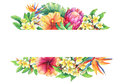 Banner with branches purple protea, plumeria, strelitzia and hibiscus tropical flowers.