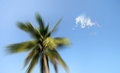 Banner coconut tree white cloud background clear sky sunny day intended use as banners background beach related purposes Stock Images