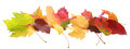 Banner of colorful autumn or fall leaves horizontal diverse colors and shapes showing the changing seasons arranged in a Royalty Free Stock Images