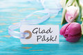 Banner with glad pï sk the swedish words which means happy easter on turquiose background Stock Photography