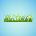 Banner with grass blue summer background and flowers illustration Stock Photography