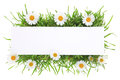 Banner with grass and flowers