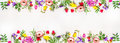 Banner for the web site, various multicolored spring flowers, space  text, top view Royalty Free Stock Photo