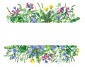 Banner with wild meadow flowers and grass, isolated on white background. Royalty Free Stock Photo
