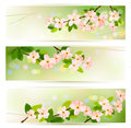 Banners with blossoming tree brunch Royalty Free Stock Images