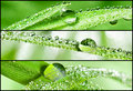 Banners - Grass with dewdrops 1 Royalty Free Stock Images