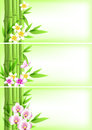 Banners with green bamboo and flowers vector tropical Stock Photo
